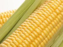 Как выбирать и варить кукурузу?
